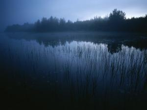 Misty View of Taiga Forest by Mattias Klum