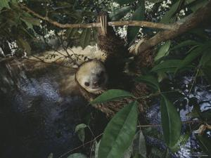 Sloth by Mattias Klum