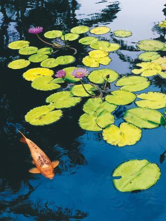 Koi Pond I