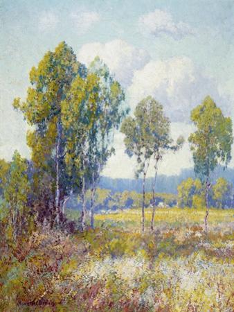 Eucalyptus by Maurice Braun