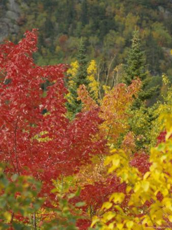 Fall Colours, Eastern Townships, Quebec, Canada, North America