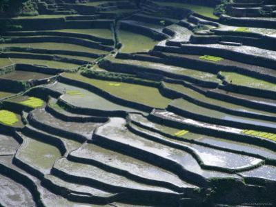Flooded Rice Terraces, 2000 Years Old, Banaue, Island of Luzon, Philippines, Southeast Asia, Asia