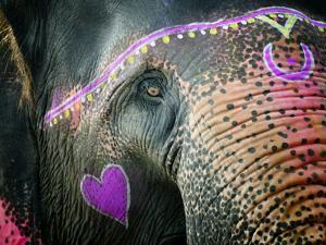 Elephant's Eye. Sonepur Mela, India by Mauricio Abreu