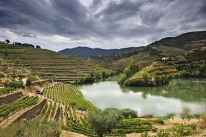 Grapes Harvest Along the River Tedo, a Tributary of the River Douro. Alto Douro, Portugal by Mauricio Abreu