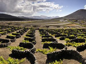 Traditional Vineyards in La Geria Where the Wines are Produced in a Volcanic Ash Soil, Lanzarote, C by Mauricio Abreu