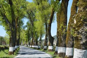 Tree lined road, Marvao, Portugal by Mauricio Abreu