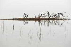 A Fallen Tree in Jordan Pond in Acadia National Park, Maine by Mauricio Handler