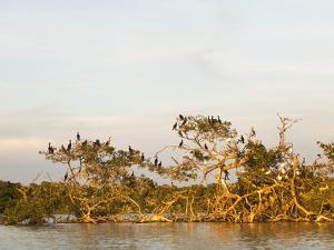 Bird Island in the Everglades National Park by Mauricio Handler
