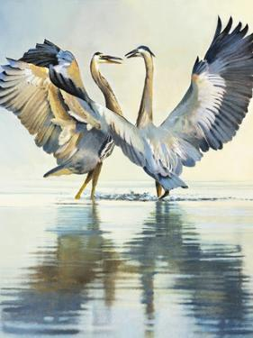 Great Blue Herons by Max Hayslette