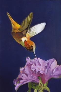 Rufous Hummingbird by Max Hayslette