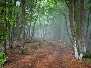 Green Spring Misty Forest. May in Crimea by Maxim Weise