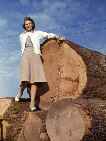 Woman Stands on a Pile of Gigantic Douglas Fir Logs by Maynard Owen Williams
