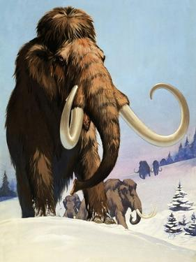 Mammoths from the Ice Age, 1969 by Mcbride