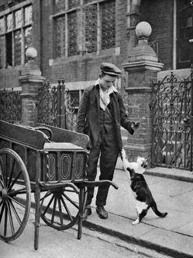 Cat's Meat Man, London, 1926-1927 by McLeish