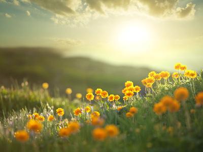 https://imgc.allpostersimages.com/img/posters/meadow-at-morning_u-L-Q130DRC0.jpg?p=0