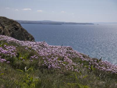 https://imgc.allpostersimages.com/img/posters/meadow-wild-flowers-coast-england_u-L-Q11YJNS0.jpg?p=0
