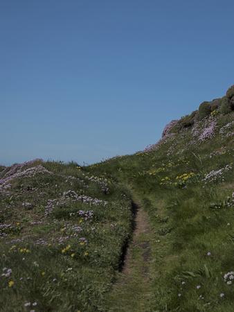 https://imgc.allpostersimages.com/img/posters/meadow-wild-flowers-grass-coast-england_u-L-Q11YOFN0.jpg?artPerspective=n