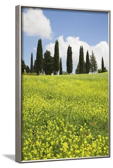 Meadow with Wildflowers and Cypresses-Markus Lange-Framed Photographic Print
