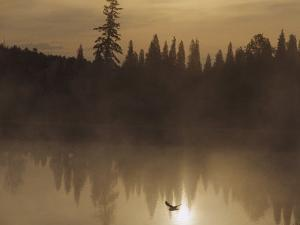 A Bird Flies Low over Fog-Shrouded Lake Superior by Medford Taylor