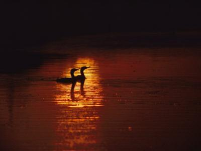 Cormorants Silhouetted in Suns Reflection on the Chesapeake Bay by Medford Taylor