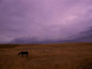 Horse Grazing on a Western Ranch Land by Medford Taylor