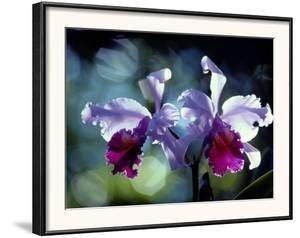 Orchids by Medford Taylor