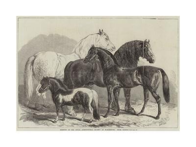 https://imgc.allpostersimages.com/img/posters/meeting-of-the-royal-agricultural-society-at-manchester-prize-horses_u-L-PUSNNS0.jpg?p=0