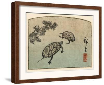 Meeting of Two Turtles