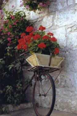 Flower Box Bike by Meg Mccomb