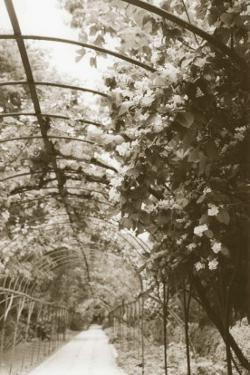Royal Botanical Garden, Madrid by Meg Mccomb