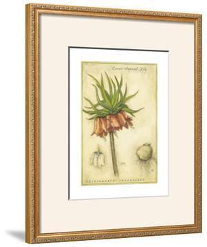 Crown Imperial Lily by Meg Page