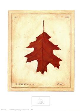 Oak Leaf by Meg Page