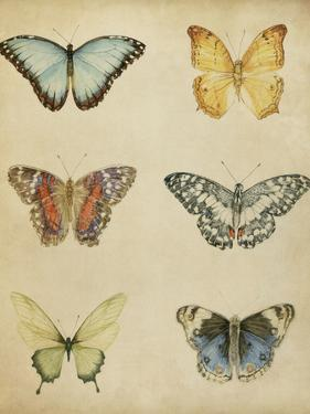 Butterfly Varietal I by Megan Meagher