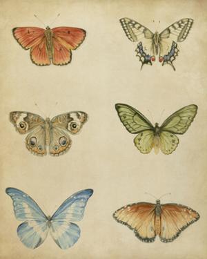 Butterfly Varietal II by Megan Meagher