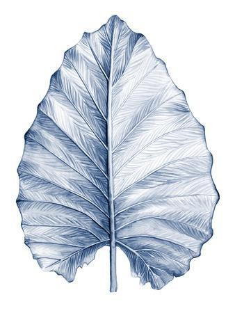 Indigo Tropical Leaves III