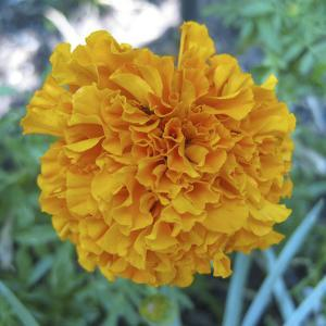Marigold II by Megan Meagher