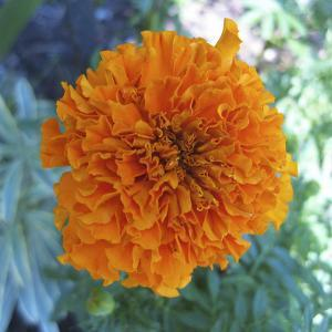 Marigold III by Megan Meagher