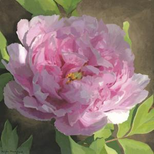 Peony in Pink II by Megan Meagher