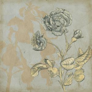 Shadow Floral IV by Megan Meagher