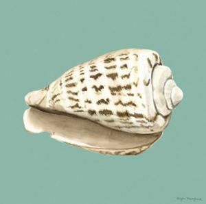 Shell on Aqua II by Megan Meagher
