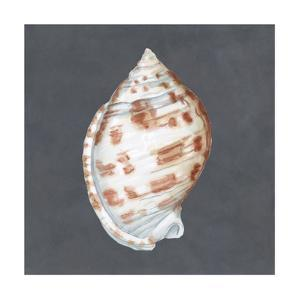 Shell on Slate I by Megan Meagher
