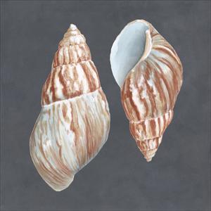Shell on Slate V by Megan Meagher