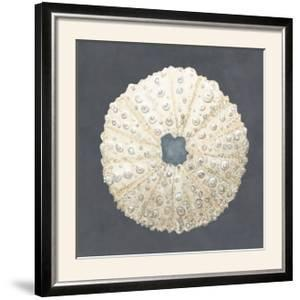 Shell on Slate VII by Megan Meagher