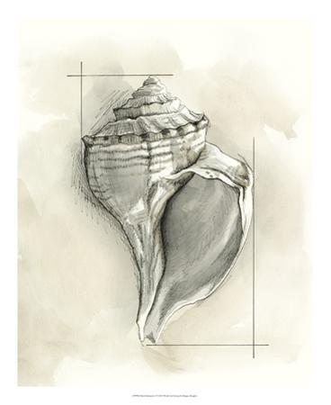 Shell Schematic I by Megan Meagher