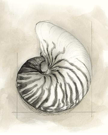 Shell Schematic II by Megan Meagher
