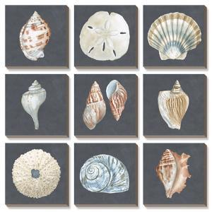 Shells on Slate by Megan Meagher
