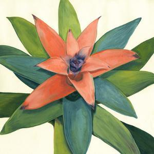 Tropical Bloom III by Megan Meagher