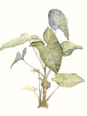Tropical Watercolor Leaves IV by Megan Meagher