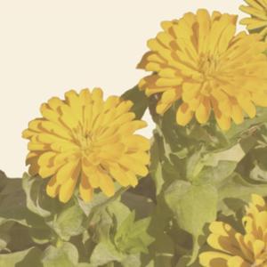 Vintage Bloom I by Megan Meagher
