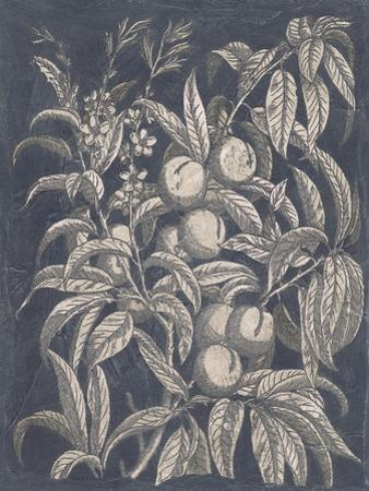 Vintage Fruit and Floral II by Megan Meagher